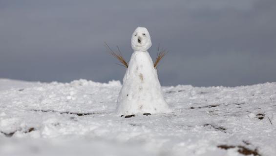 Snowmanning huolestuttaa sinkkuja.