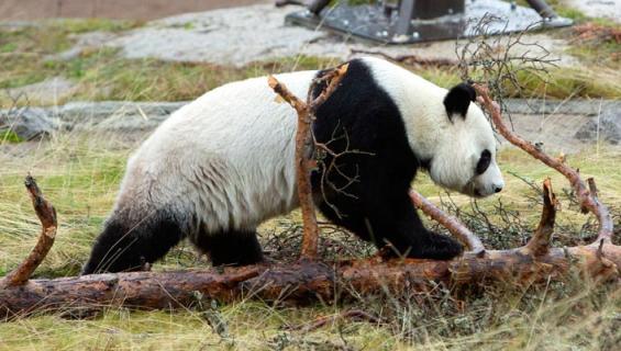 Ähtärin eläinpuistossa alkaa yt-neuvottelut.