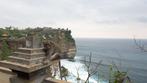 Bali on reppureissaajan unelmakohde!