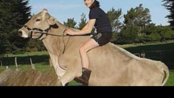 Tyttö koulutti lehmän hyppäämään kuin hevonen!