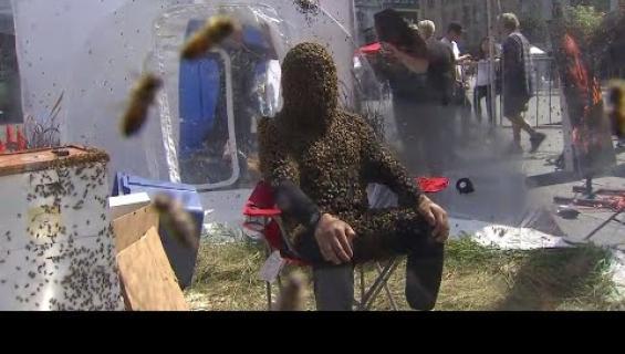 Tältä näyttää mehiläisparranmaailmanennätys!
