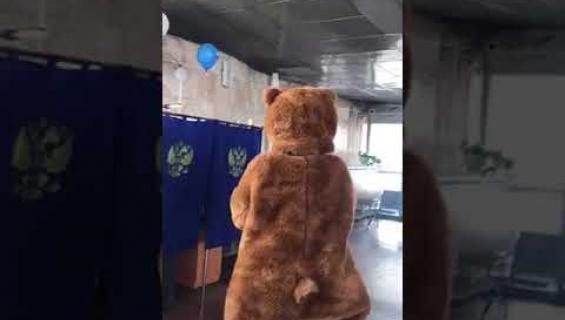 No nyt, karhu äänesti Venäjän vaaleissa - katso!