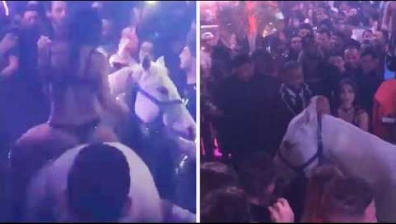 Apua, mitä eläinrääkkäystä! Bikineihin pukeutunut nainen ratsasti hevosella yökerhoon! Katso videolta millainen paniikki syntyi!
