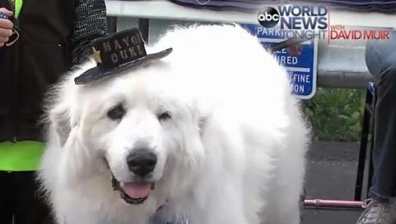 Koira jäi eläkkeelle pormestarin paikalta! Katso video!