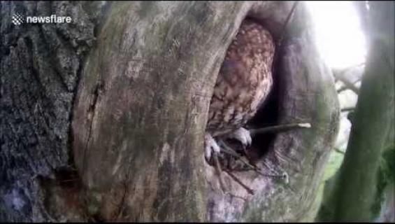 Tämä hillitön eläinvideo leviää netissä kuin häkä: äkäinen orava löylyttää kutsumatonta vierasta - katso!