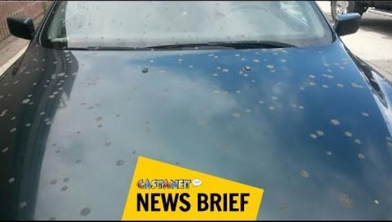 Karmeaa! Taivaalta satoi ulostetta ihmisten niskaan - kymmeniä uhreja! Katso video!