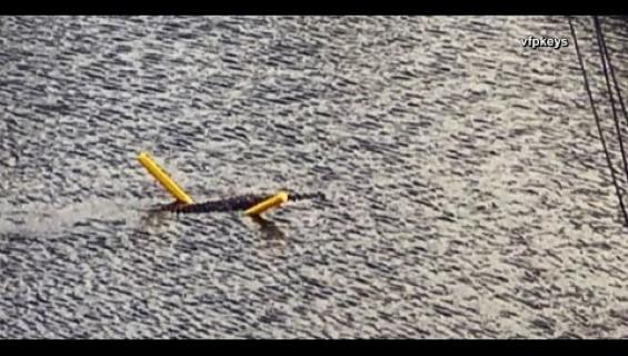 Uimaleluista nauttinut krokotiili tallentui kameralle - katso hauska video!