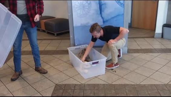 Hyväntekeväisyyteen lahjoitettujen vaatteiden seasta löytyi kuningasboa! Katso video!