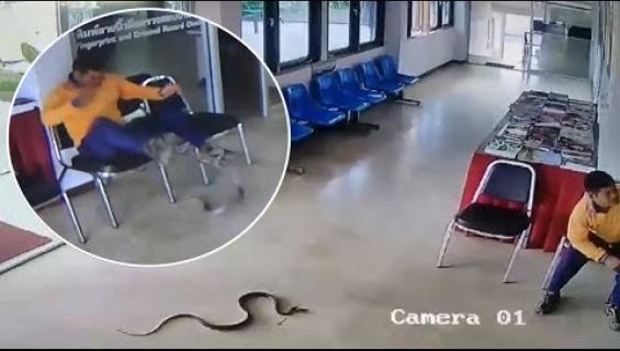 Käärme luikerteli poliisiasemalle ja kävi miehen kimppuun! Katso video!