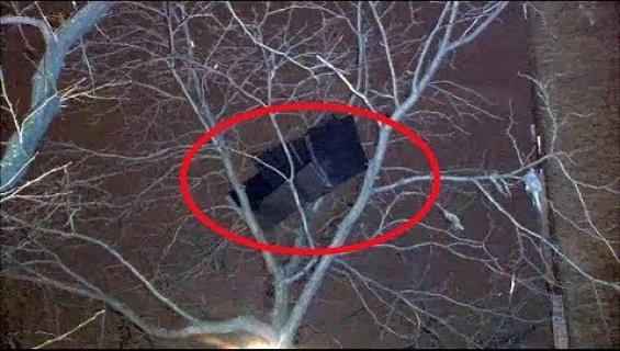 Sohva puussa hämmentää Manhattanin asukkaita! Katso video!
