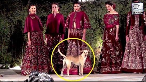 Hykerryttävä video! Catwalkille karannut koira varasti valokeilan muotinäytöksessä - katso!