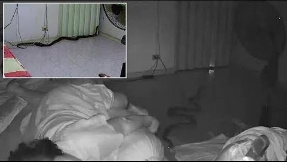 Kuin kauhuelokuvasta! Käärme luikerteli nukkuvan naisen viereen ja puri jalkaan!