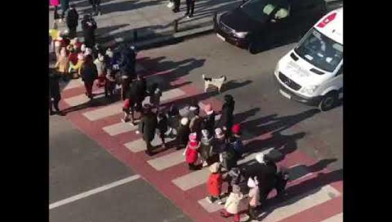 Kulkukoirasta tuli sometähti: auttaa lapsia ylittämään kadun turvallisesti - katso!