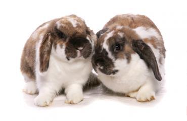 Luksusliikkeen pehmolelu on valmistettu kanin turkista.
