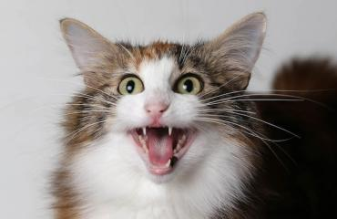 Silminnäkijät kertoivat kissan olevan aseistautunut rynnäkkökiväärillä