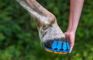 Hevosenlenkkarit