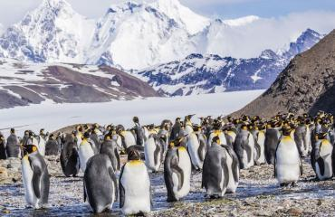 Tutkijat löysivät uuden pingviinin.