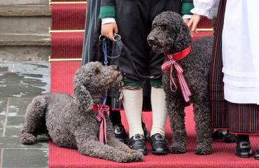 Euroopan kuninkaallisilla on paljon koiria.