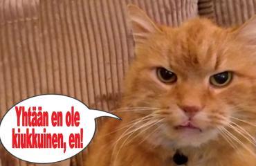 kissa, hauskat kuvat