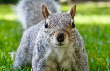 Orava valittiin oppilaskuntaan.