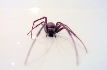Hämähäkin purema johti amputaatioon.