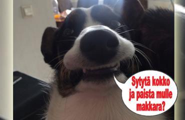 hauskat kuvat, koira