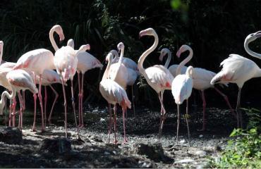 Karannut flamingo löytyi Texasista.