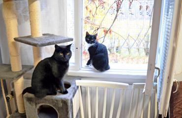 Hyvinkään eläinsuojeluyhdistyksen kissoja.