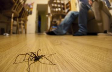 Hämähäkki aiheutti kaaoksen.