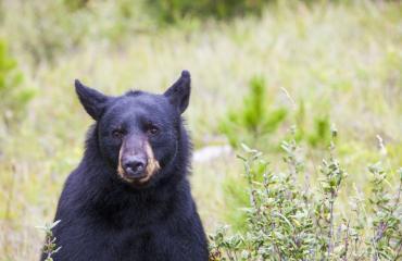 Karhu salamatkusti roska-auton kyydissä.