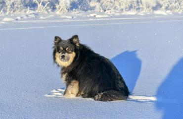 Äijä-koira on tv-tähti.