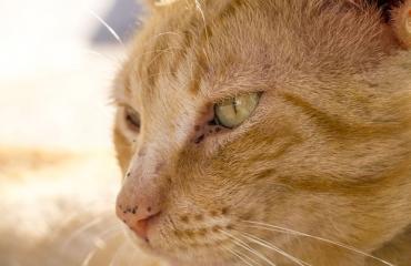"""""""Maailman kamalin kissa"""" etsii kotia!"""