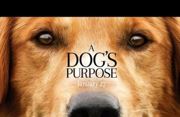 A Dog's Purpose -elokuvaa boikotoidaan: kuvauksissa rääkättiin koiraa!