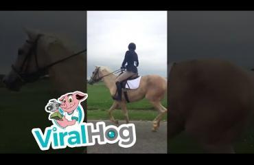 Uskomaton pelastusoperaatio! Neuvokas ratsastaja haki karanneen hevosen moottoritieltä - katso video viiden kilometrin väsytyksestä!