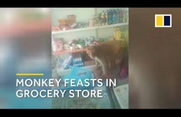 Karvainen varas kähvelsi ruokakaupasta satojen eurojen edestä herkkuja! Katso video!
