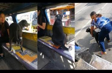 Omatoiminen koira seurasi töihin lähtenyttä omistajaansa bussilla! Katso video!
