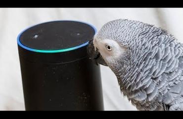 Liikaa kiroillut papukaija löysi uuden ystävän Amazonin Alexasta!