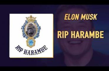 """Näin räppää Tesla-miljardööri Elon Musk - biisi kuollelle Harambe-gorillalle: """"Ruohoa poltellen, gorillaeläintarhassa ja sinua ajatellen..."""""""