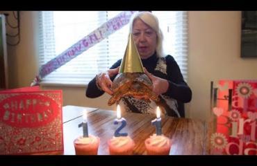 Maailman vanhin lemmikki täytti 121 vuotta!