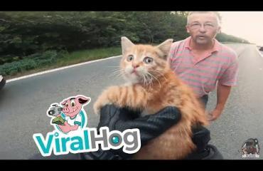 Tämä video saa hyvälle tuulelle! Moottoripyöräilijä pelasti kissanpennun ajotietä!