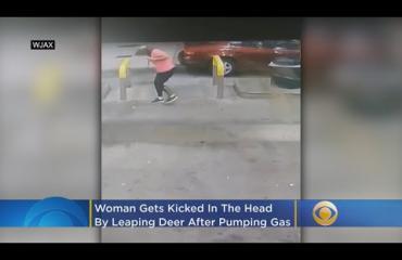 Hurja video: Nainen tankkasi autoa - peura hyppäsi puskista ja potkaisi päähän!