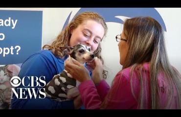 Uskomatonta! Kadonnut koira löytyi 12 vuoden jälkeen