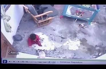 Kolumbialainen sankarikissa esti vauvaa putoamasta portaista!