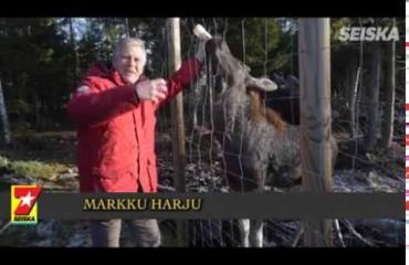 """""""Vaimon Arabia-astiat säpäleiksi!"""" Villieläimiä hoitavan Markun kotivasa Urho on kuin koira – kuvat ja video!"""