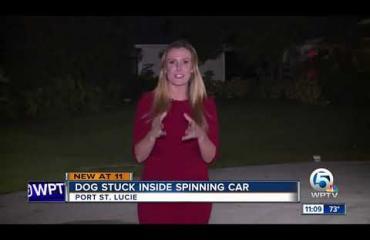 Omistaja jätti koiransa autoon Floridassa - hauva lähti ajelulle!