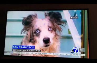 Koira varastettu! Kaunis Emilie etsii lemmikkiään Tinderin avulla: 6000 euroa löytäjälle!